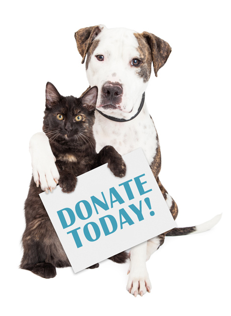 donate to dog shelter
